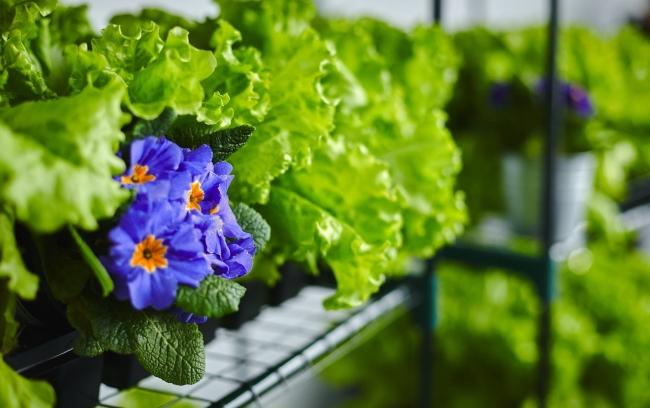 Москвичи смогут выращивать натуральные овощи в специальных теплицах